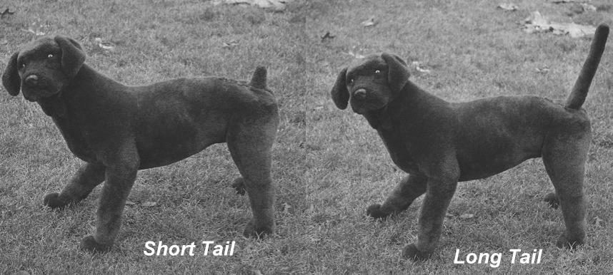 Long tail & Short tail Keywords